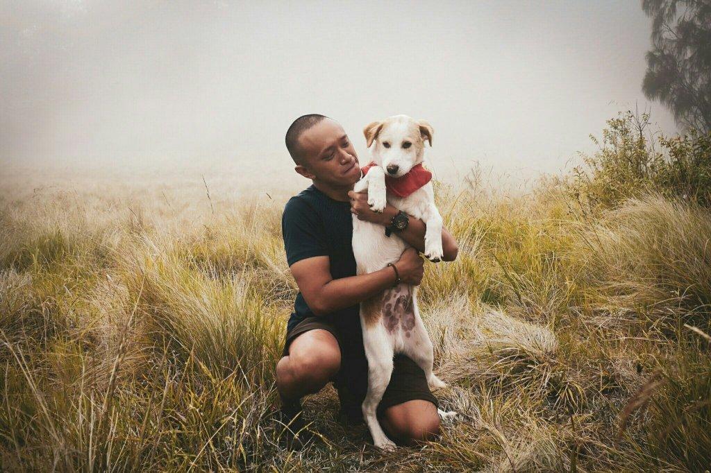 anjing di gunung lawu jalur cetho.jpeg