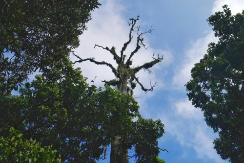 pohon keramat gunung lawu via cetho.jpeg